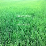 [album cover art] Gallery Six – pastoral green
