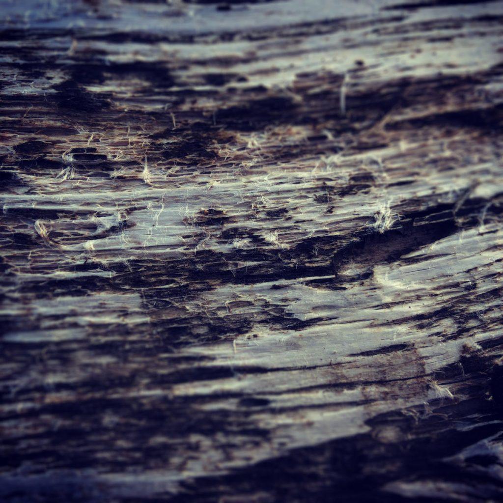 [album cover art] Hilyard - Somnolent