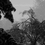 [album cover art] Hilyard - Wintergarden