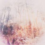 [album cover art] poemme - Arboretum