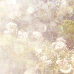 [album cover art] poemme - Moments in Golden Light